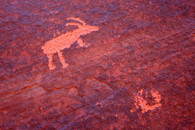 Petroglyphs at Wire Pass