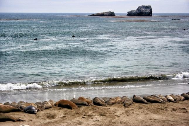 Elephant seals on a beach south of San Simeon