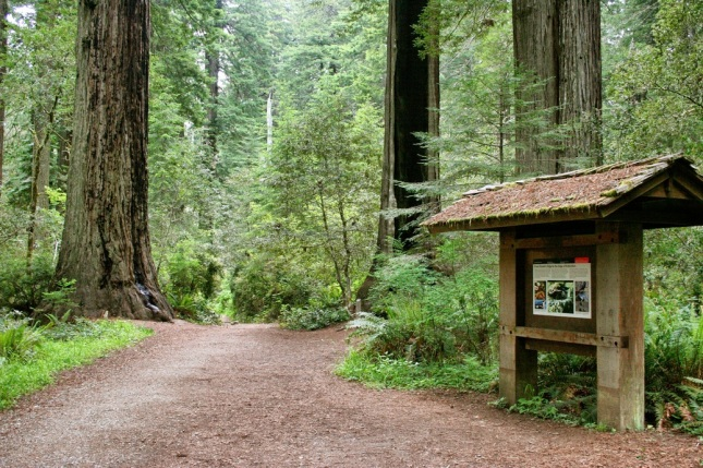 Lady Bird Johnson Grove, Redwood National Park