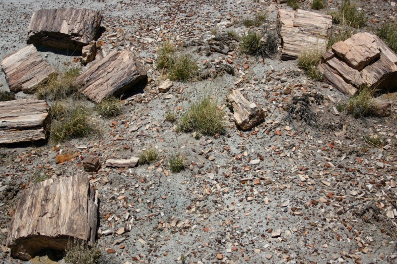 Crystal Forest is still littered with petrified wood and fragments