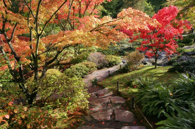 Seattle Japanese Garden: Fall Colors In The Seattle Japanese Garden (Seattle, WA