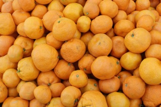 Mikan (Satsuma tangerines)