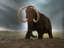 Mammoth as part of an ice age diorama