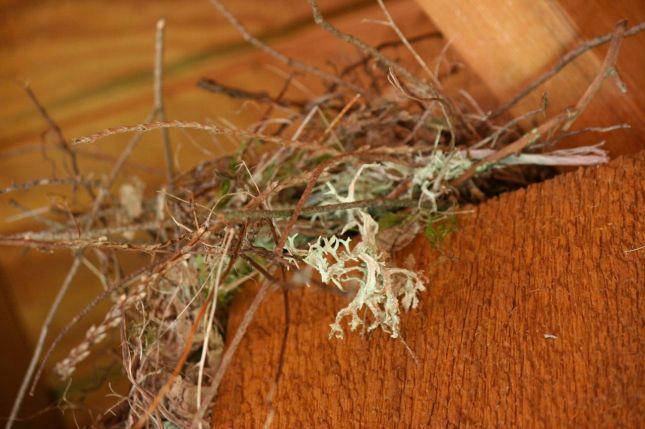 Nest on the gazebo post