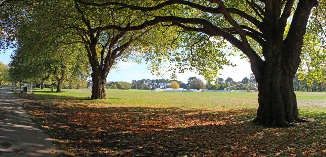 hagley park 1