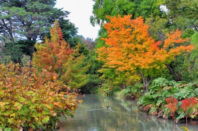 Fall color at Hagley Park