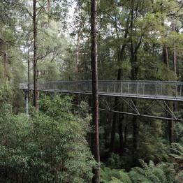 Steel walkways rise 30m above ground on average