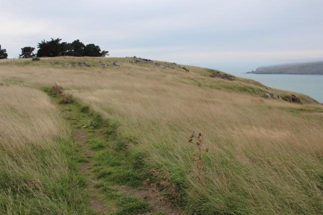 Godley Head's grassy landscape