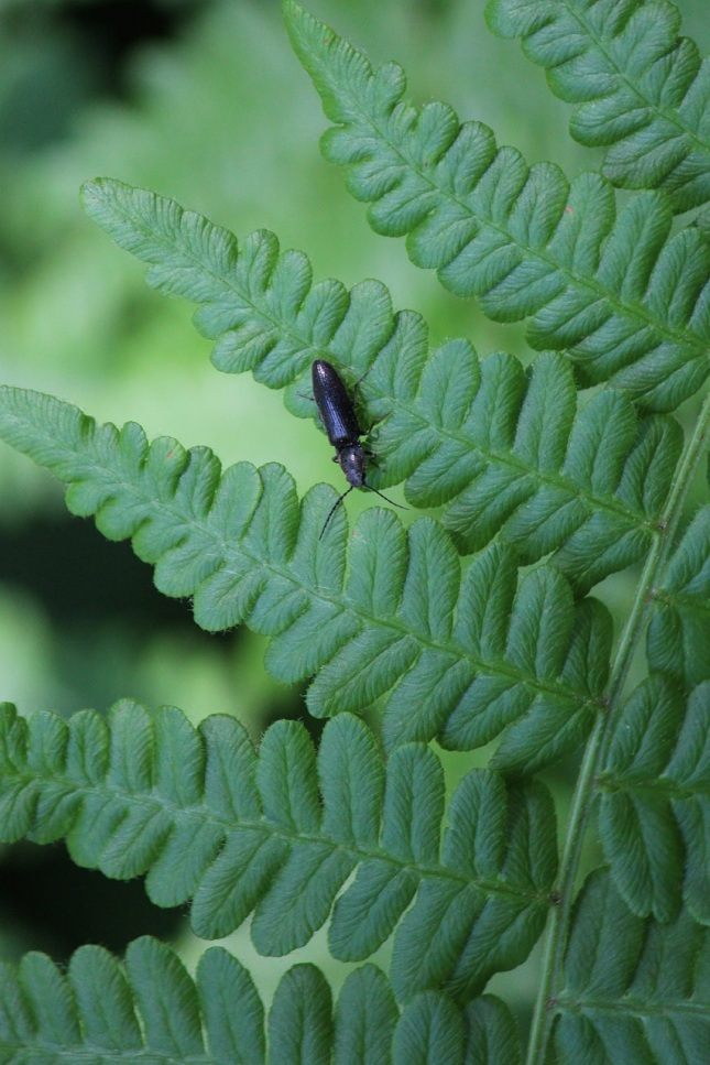 beetle and fern