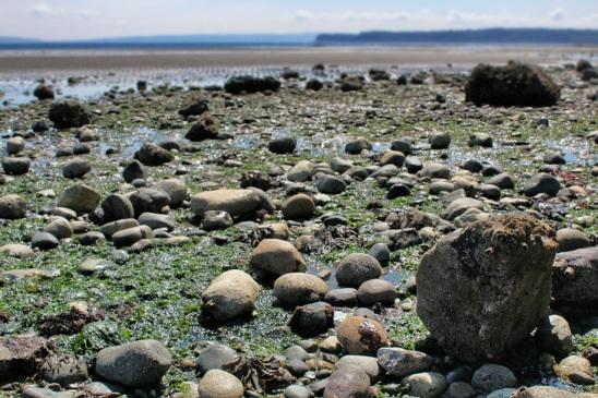 Low tide at Chetzemoka Park beach