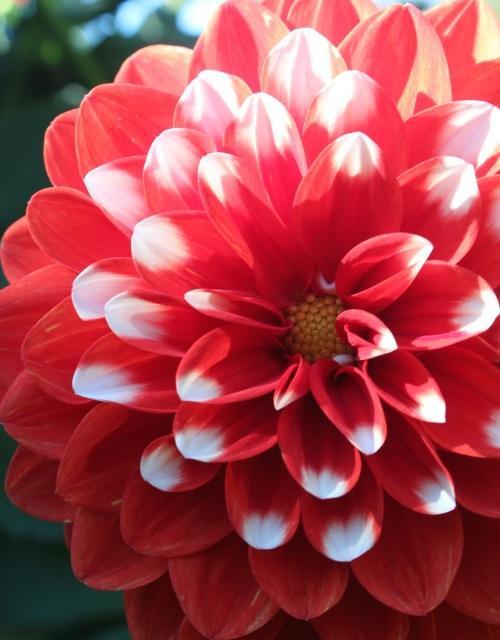 Flower on the same plant