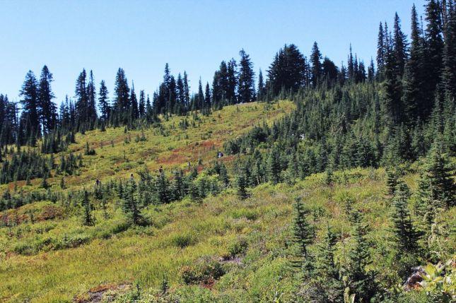 Subalpine meadows above Paradise
