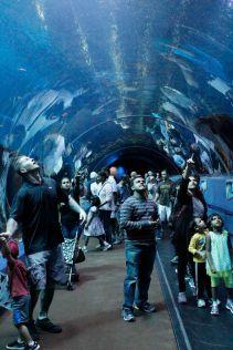 100-foot underwater tunnel