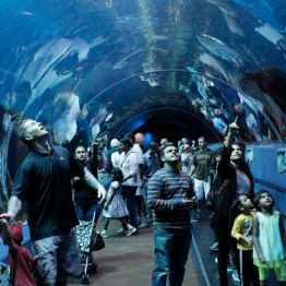 100-foot underwater tunnel
