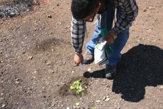 Feeding Pachamama with coca leaves and alcohol