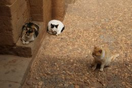 Cats in the medina, Marrakech