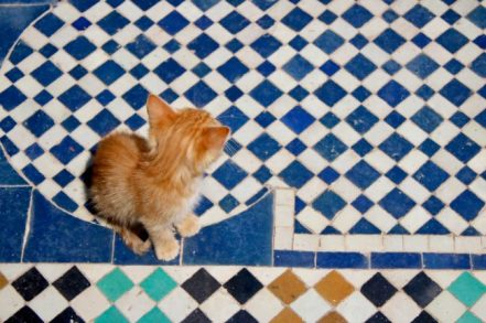 Kitten at Saadian Tombs, Marrakech
